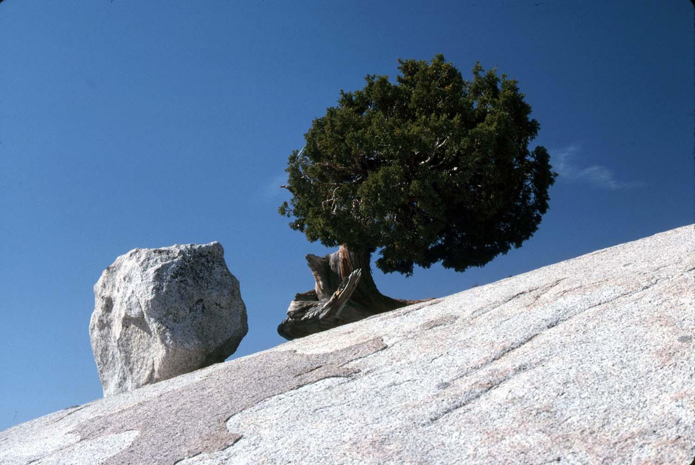 37005_Yose-Olmsted-Boulder_1500px.jpg