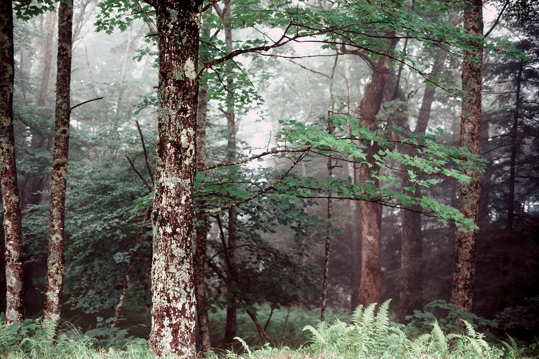 Blue Ridge Forest