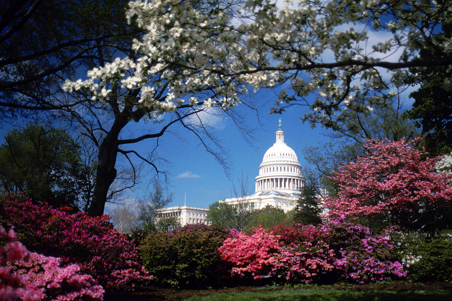 The Capitol in Spring