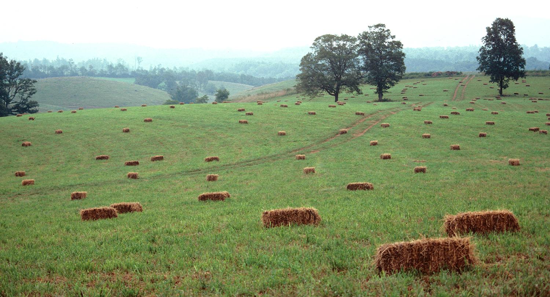 Farming the Blue Ridge