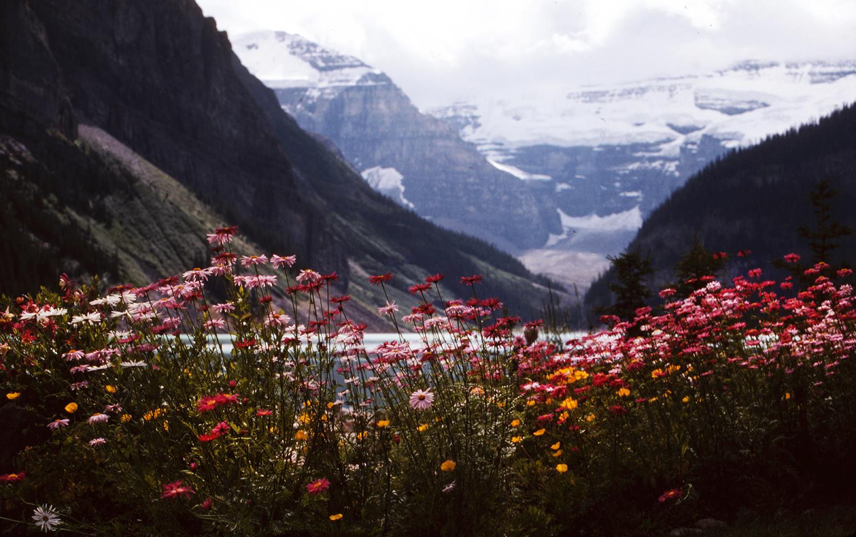 Flowers at Lake Louise