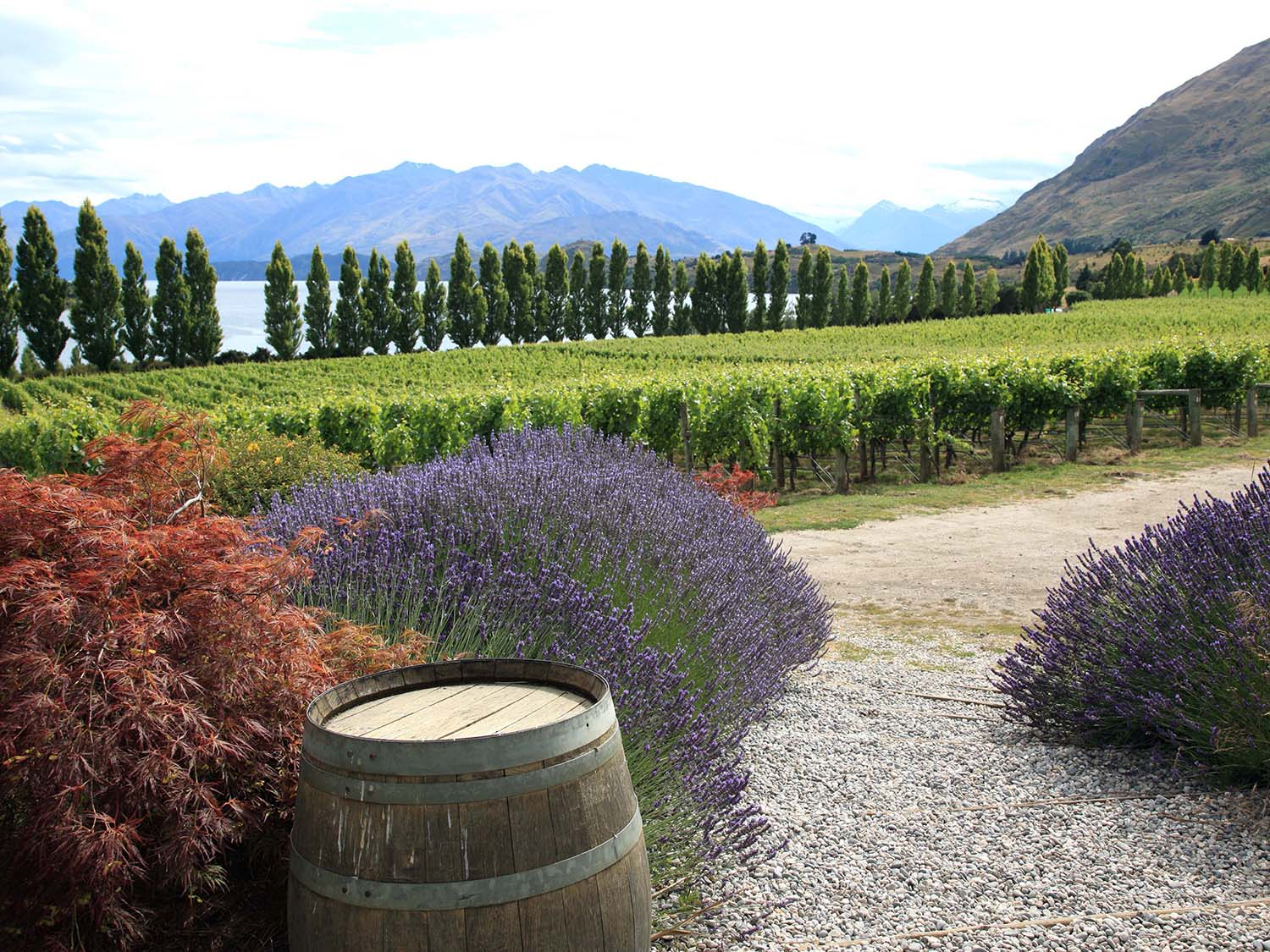 Rippon Winery by Lake Wanaka