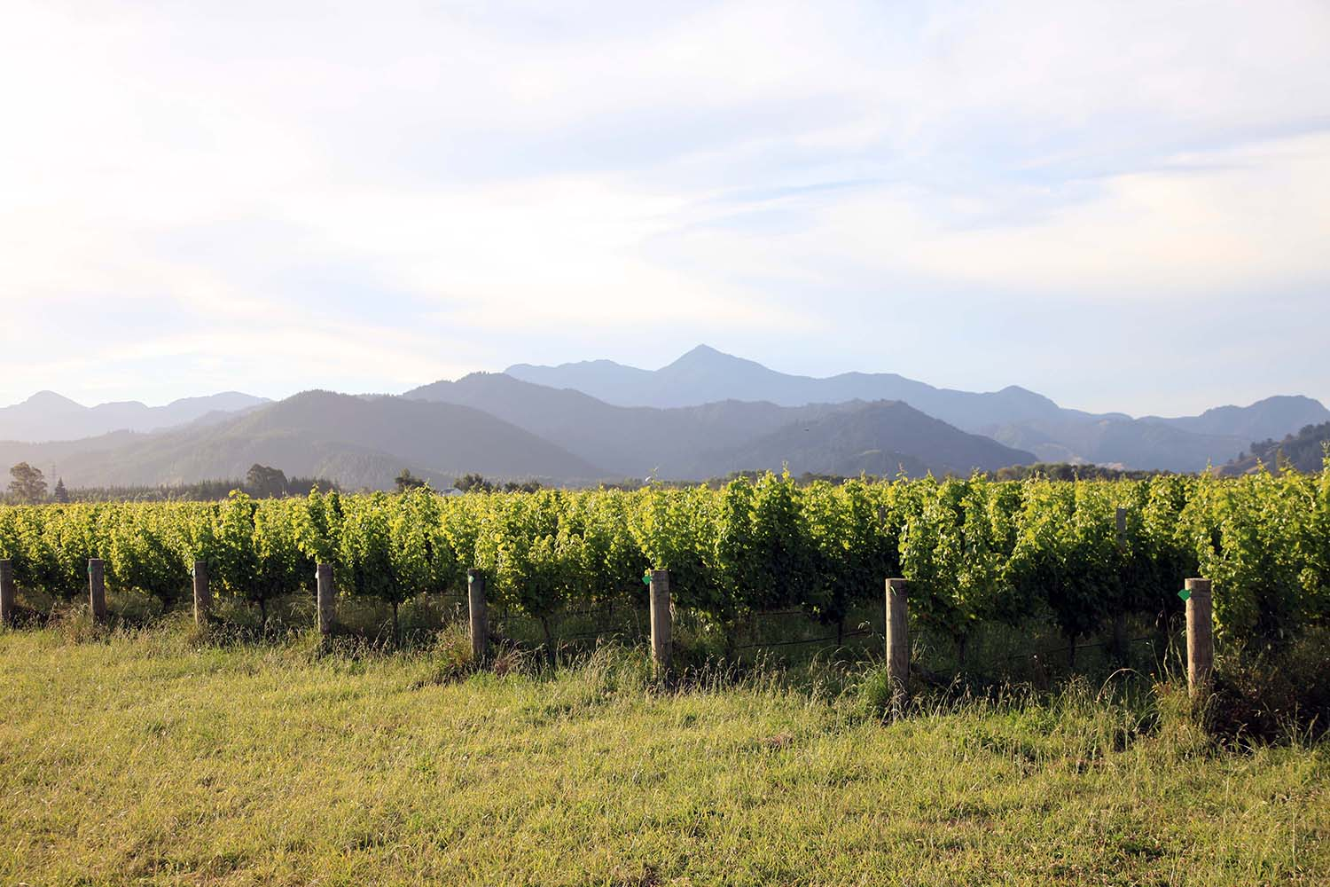 The Vineyards at Cloudy Bay