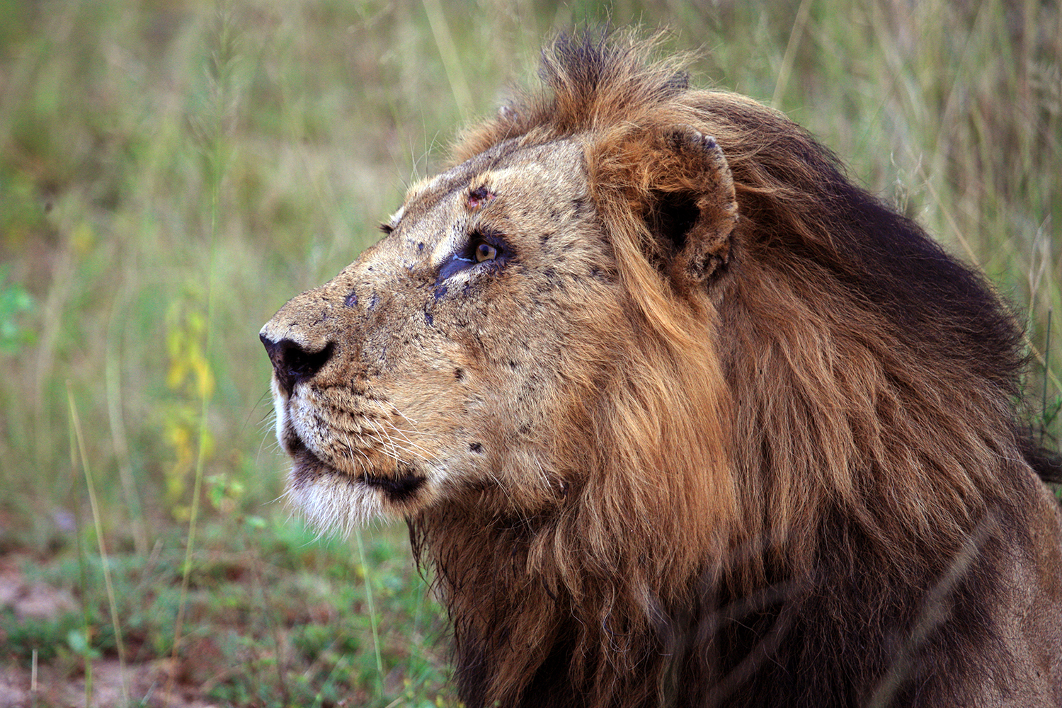 Profile of the King