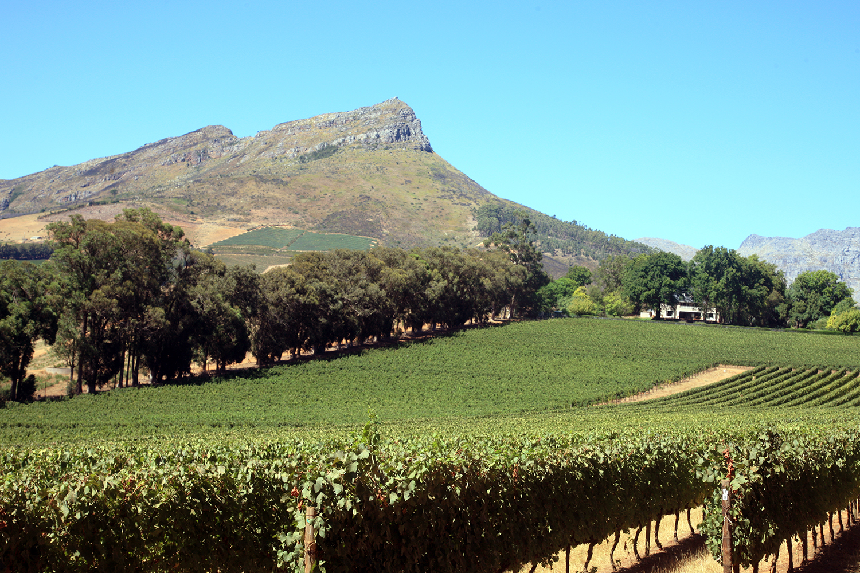 The Vineyards of Els