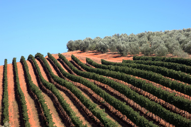 Thelema Wine Farm