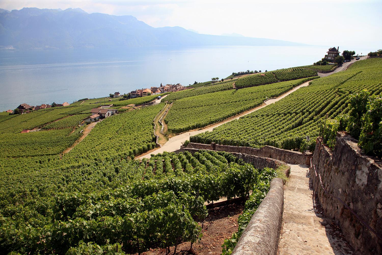 Vineyards at Lake Geneva