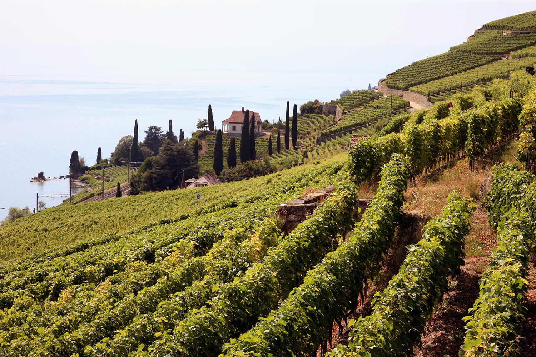 UNESCO World Heritage Grapes