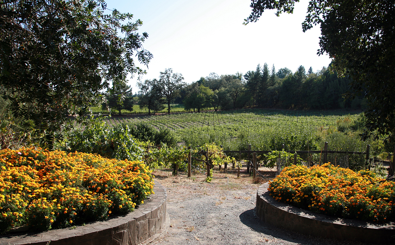 The Vineyards at Iron Horse