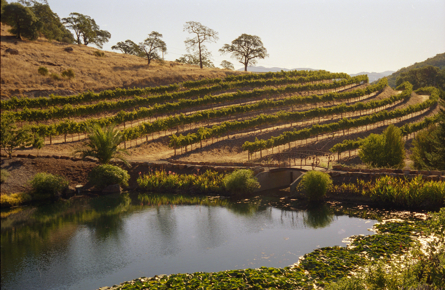 The Vineyards at Vine Cliff