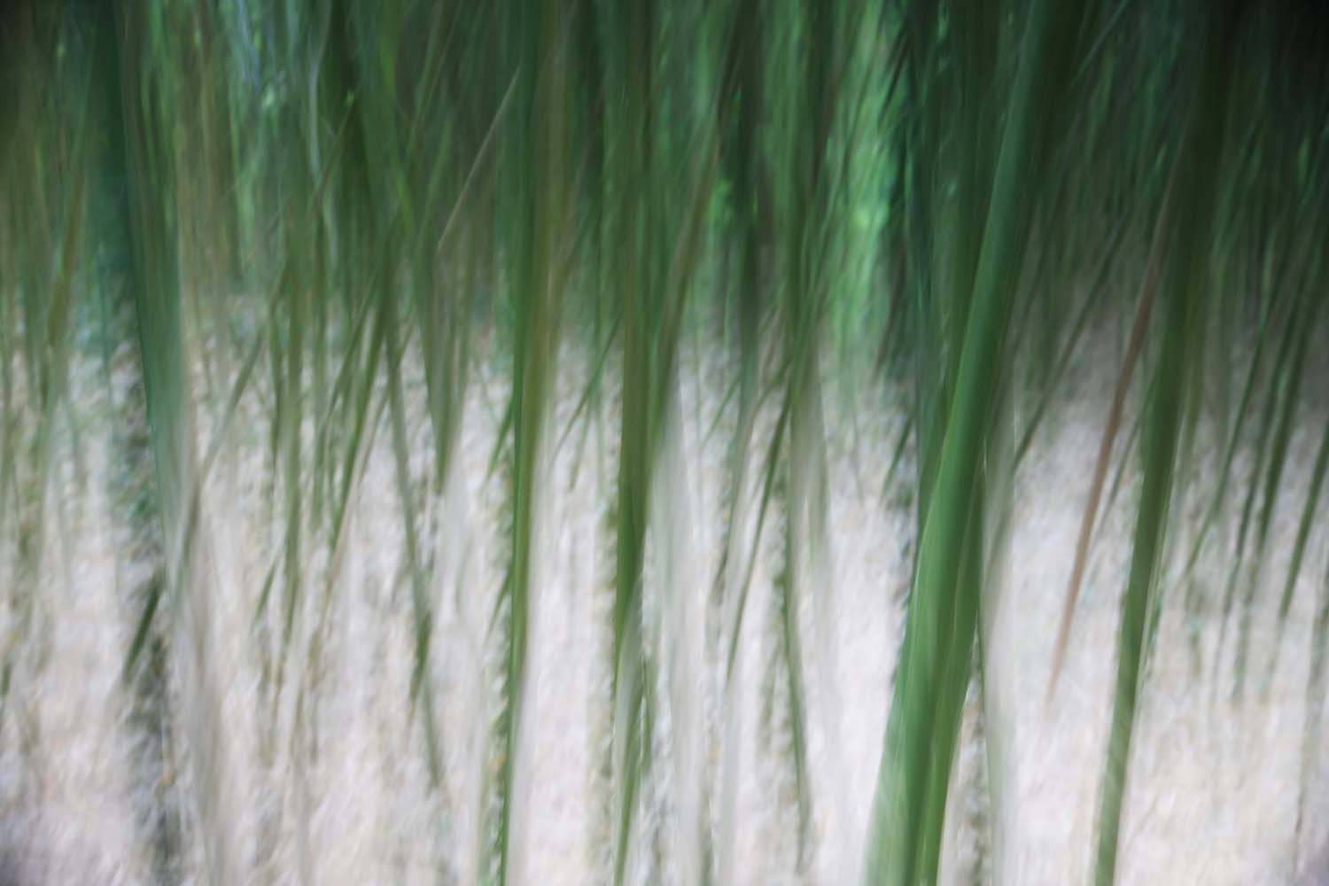 Impressions of Bamboo