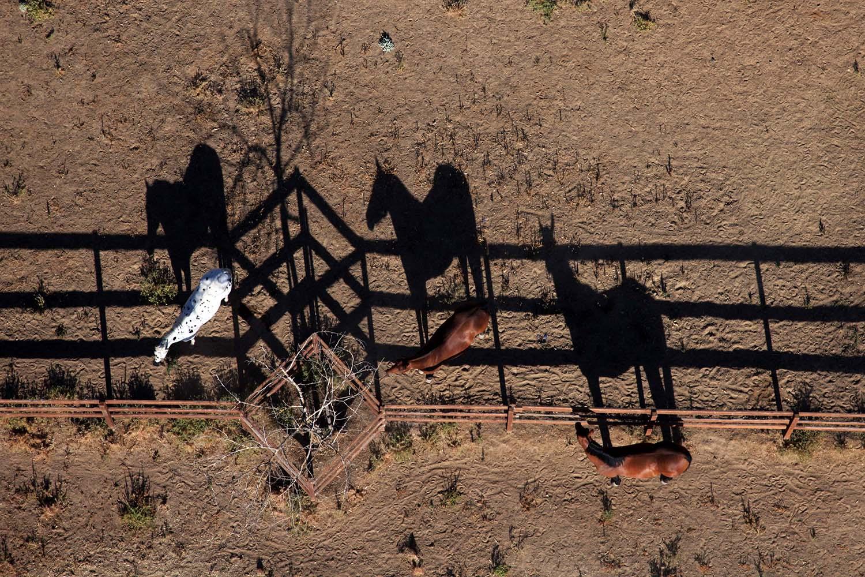 California Horse Shadows
