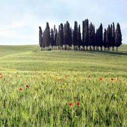 Tuscany & Florence