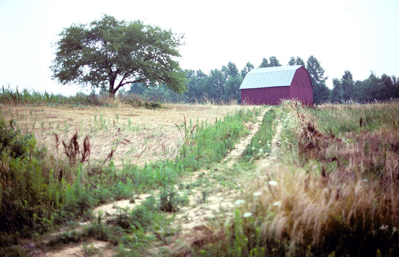 Loving the Old Barn