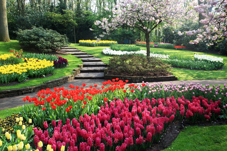 Tulip Territory