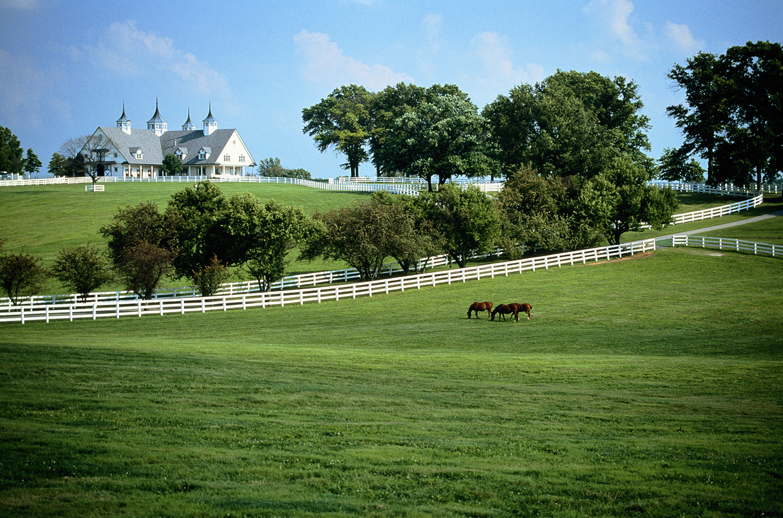 Louisville Horse Farm