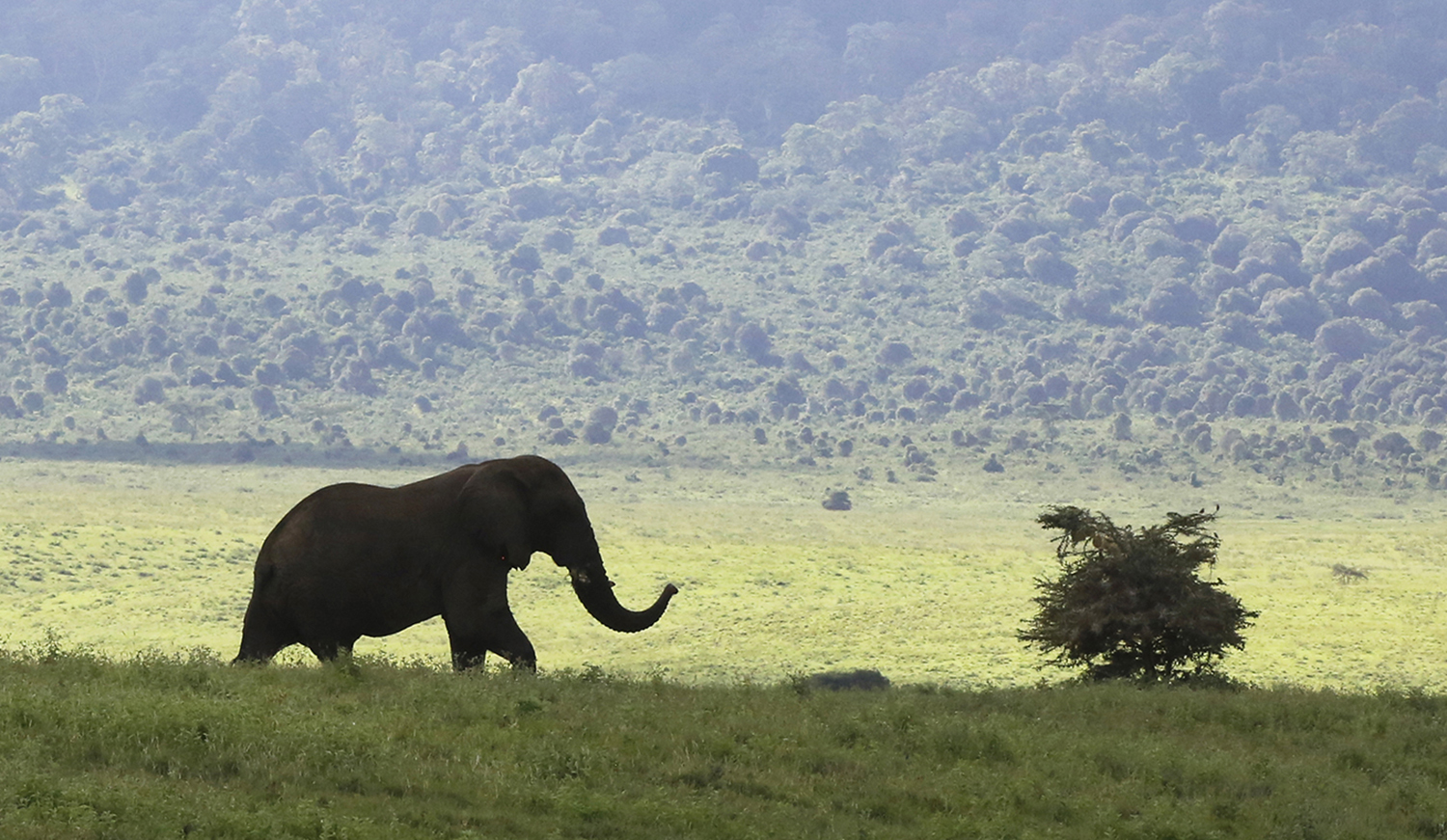 Elephant exploring the Crater