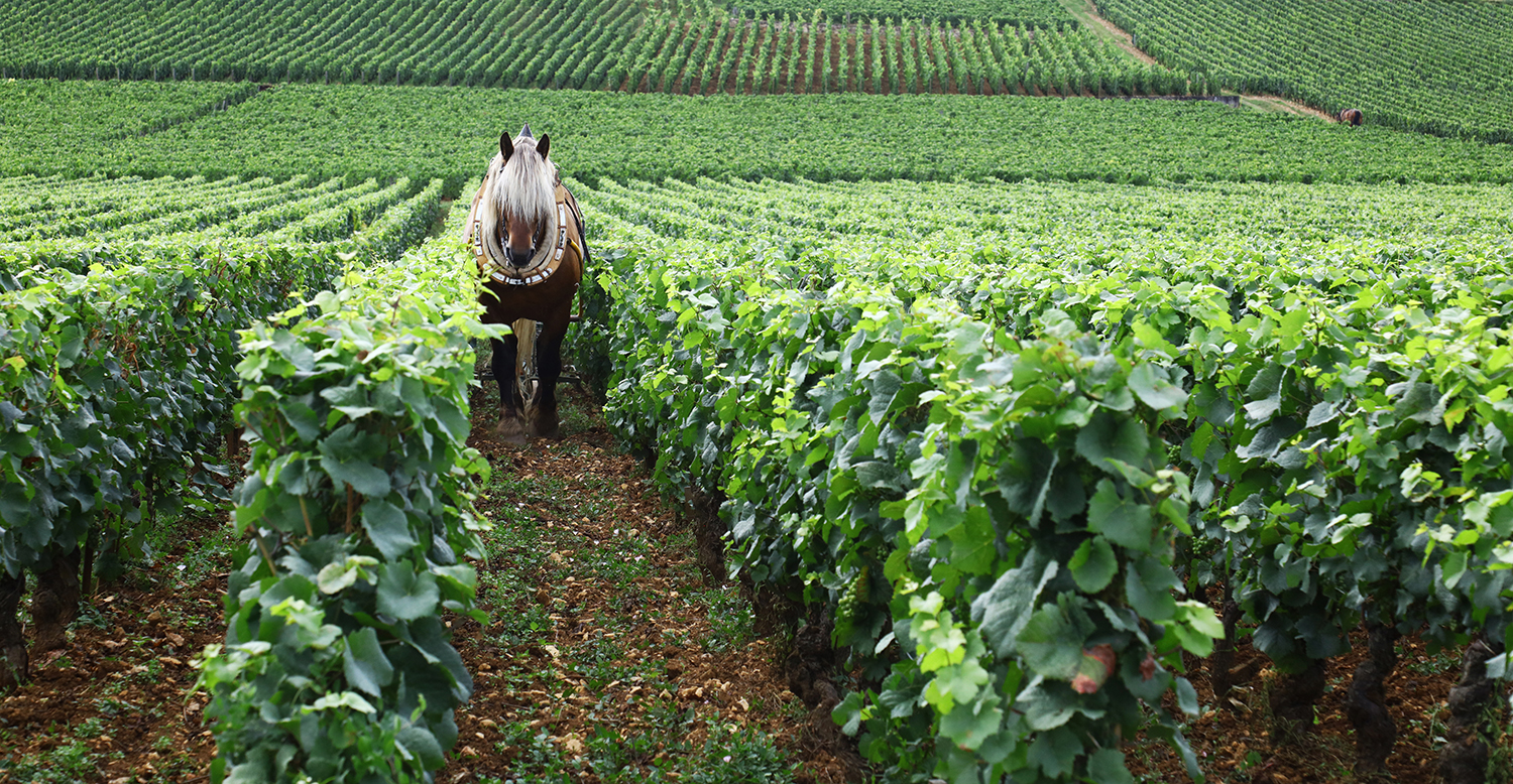 Plowing by Horse