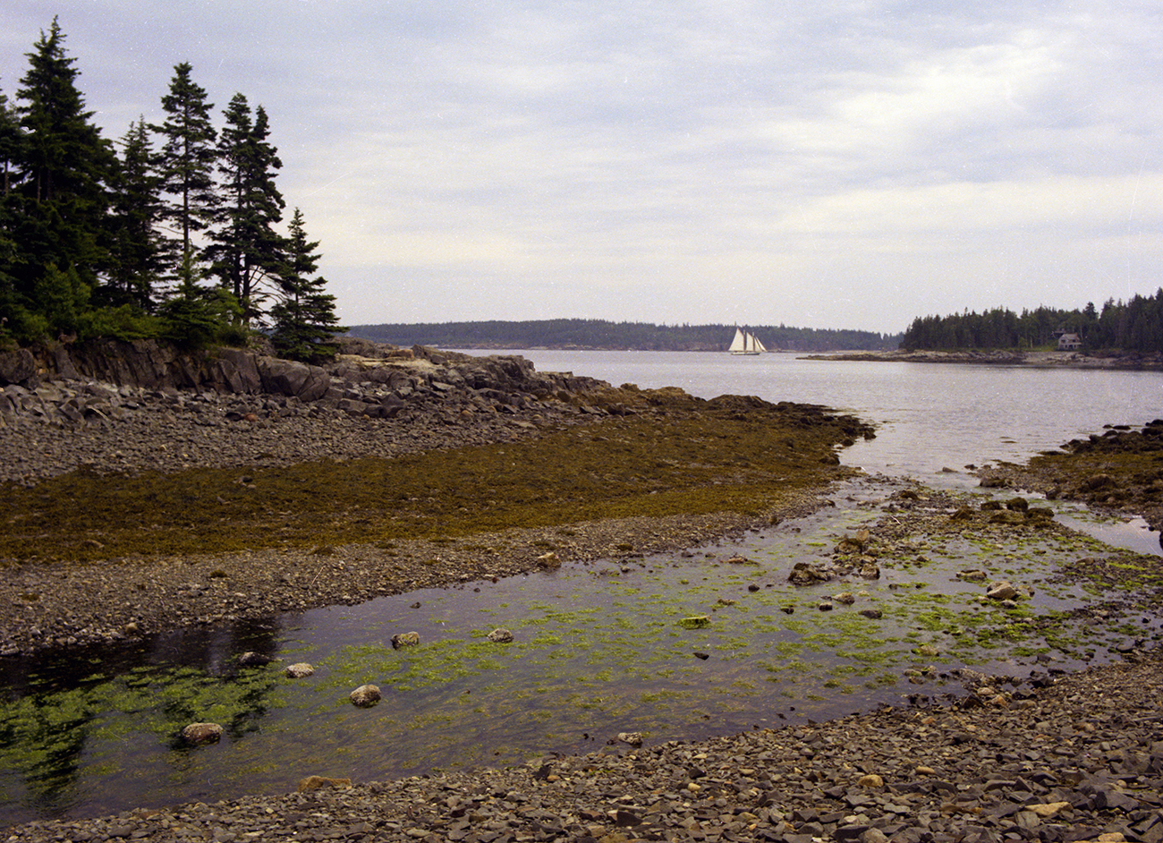 Low Tide near Seal Harbor