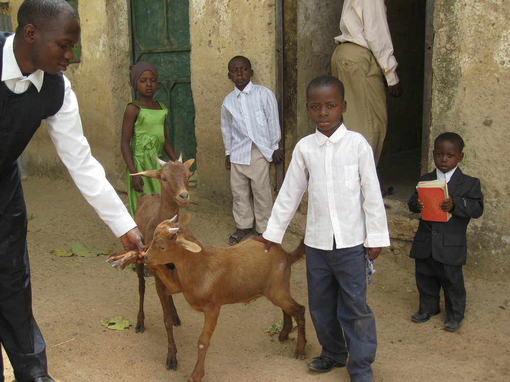 Call of Hope - The Goat Project