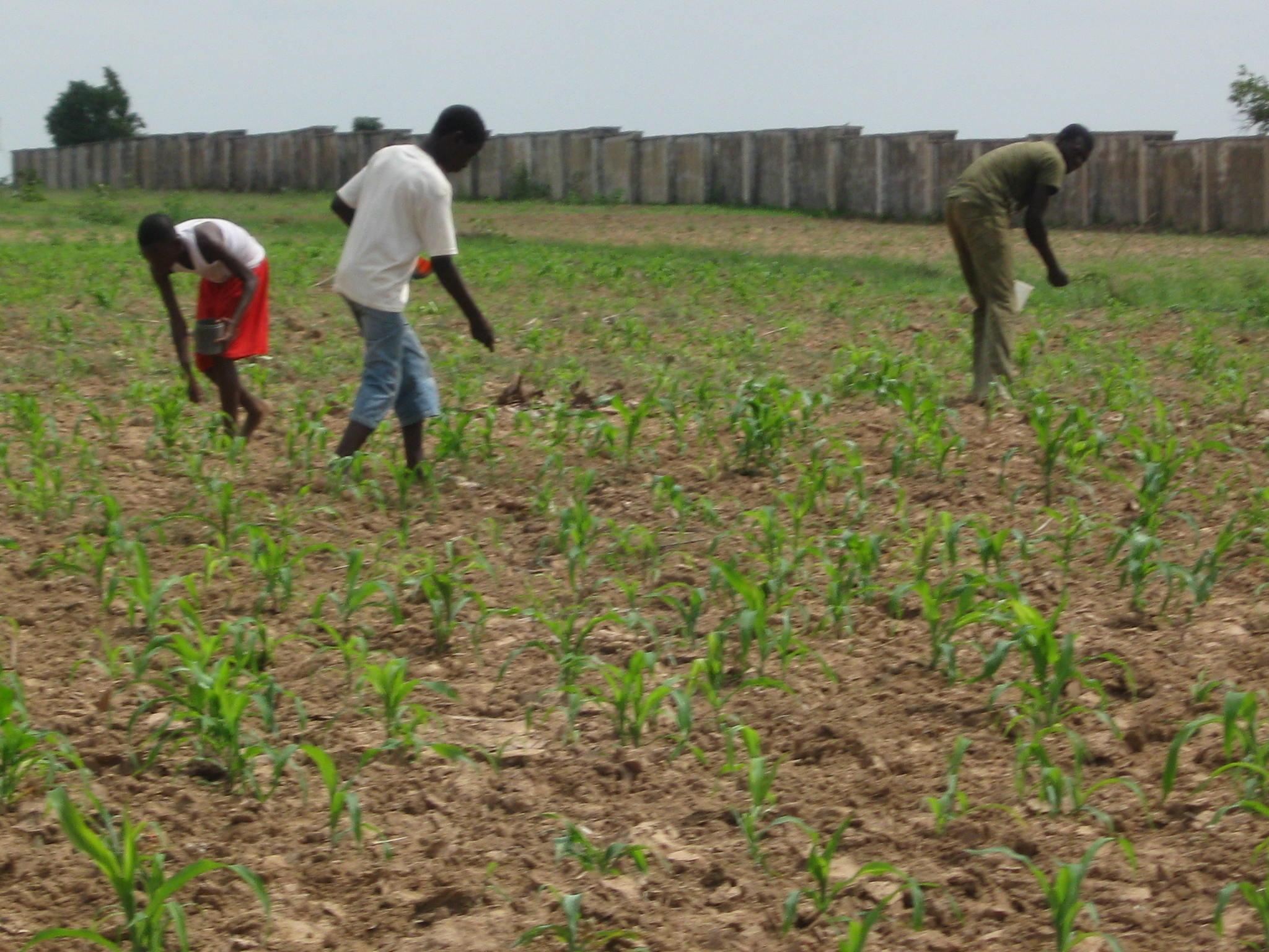 Call of Hope - Nigeria Farmer Evangelism