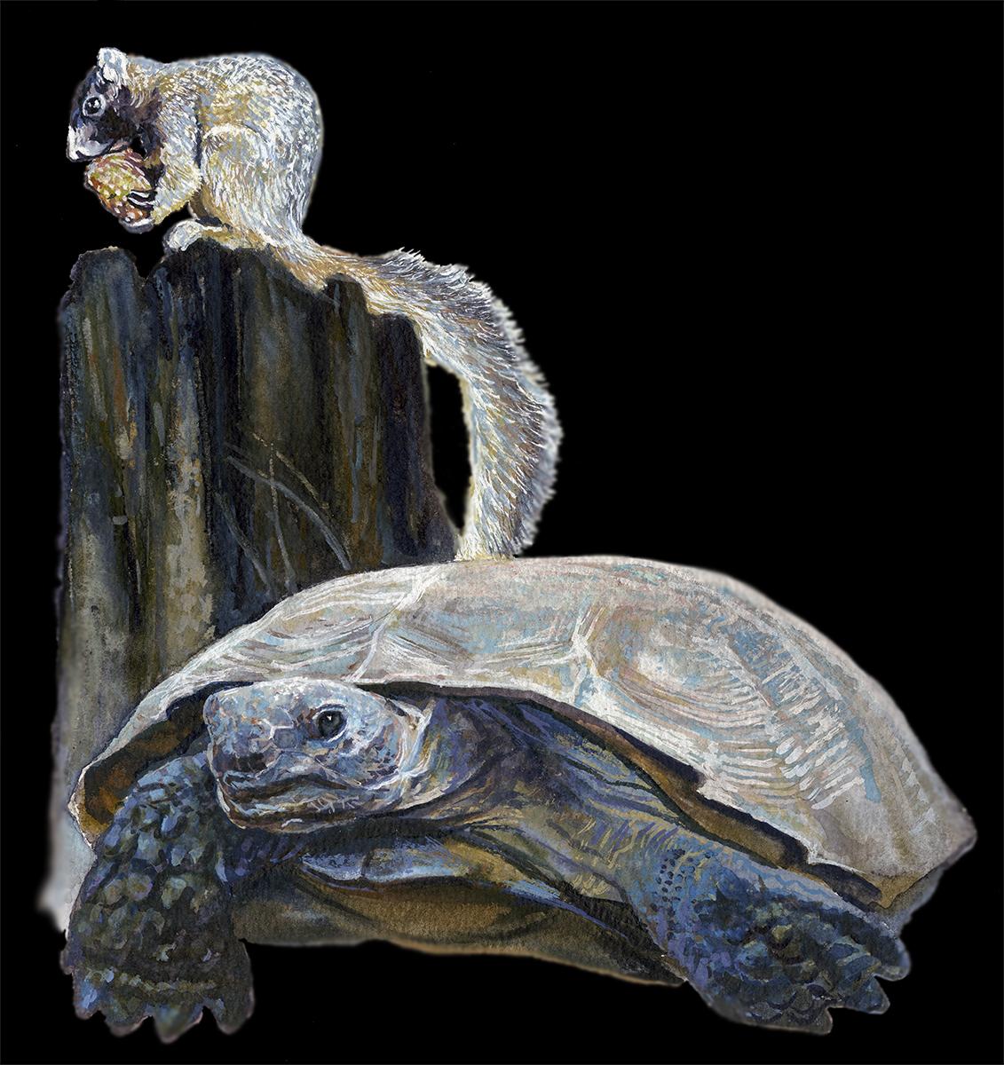 """Squirrel & Tortoise"" • Watercolor • DEP and Alafia River State Park, Hillsborough County, FL. © KT"