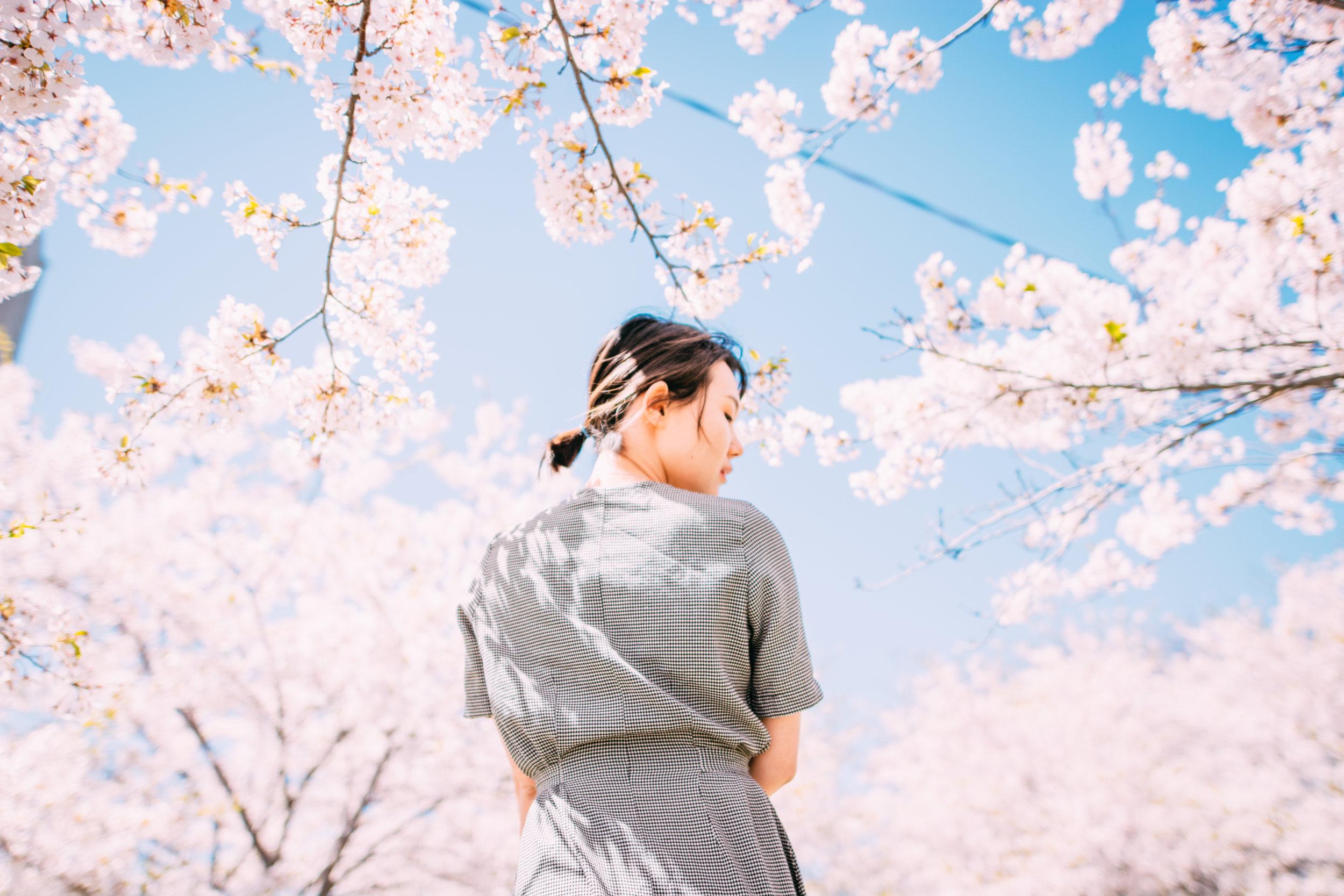 Sakura Blog-3.jpg