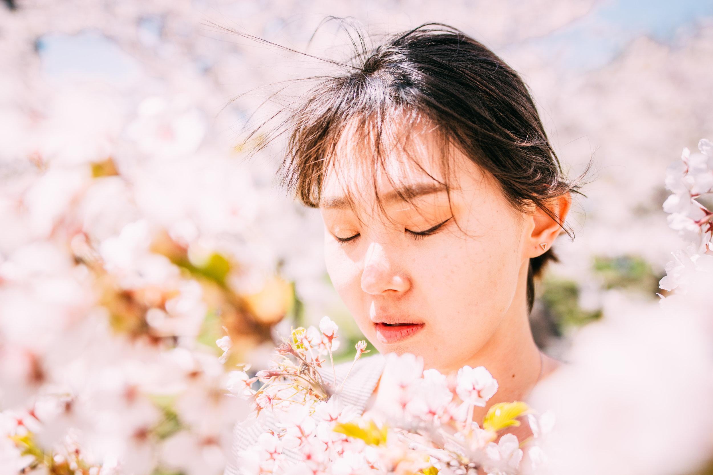 Sakura Blog-4.jpg