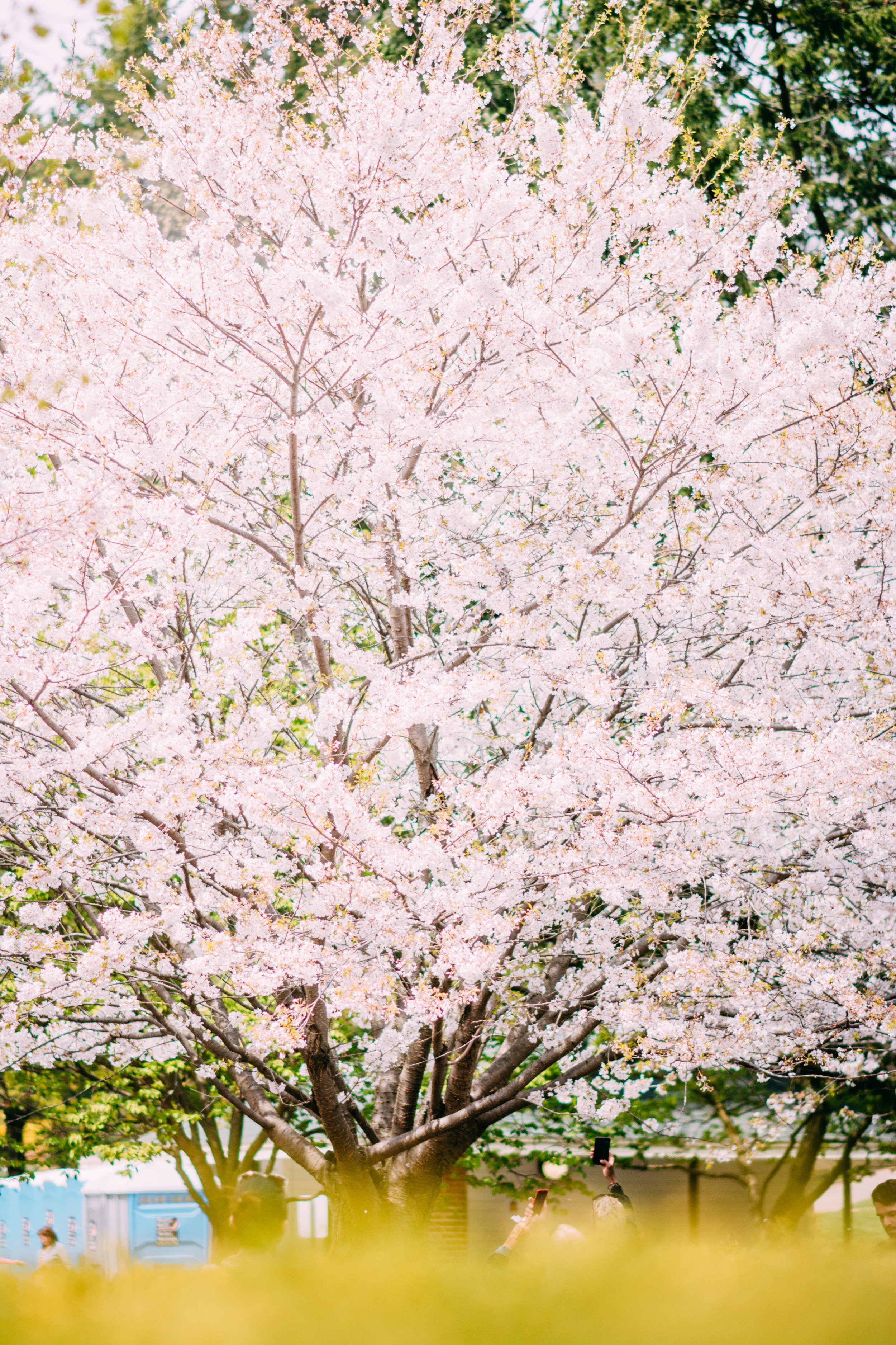 Sakura Blog-11.jpg