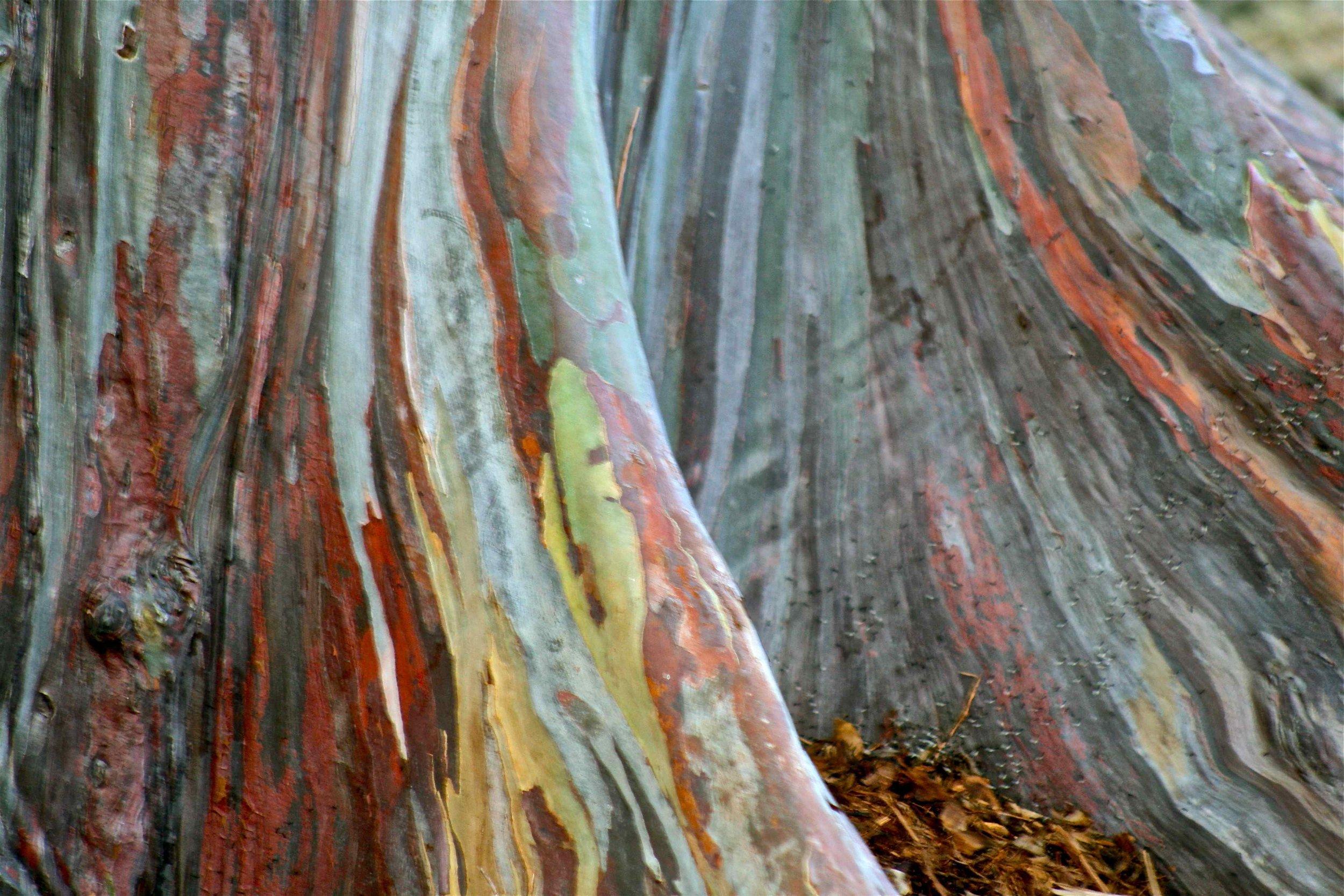 painted trunk.jpg