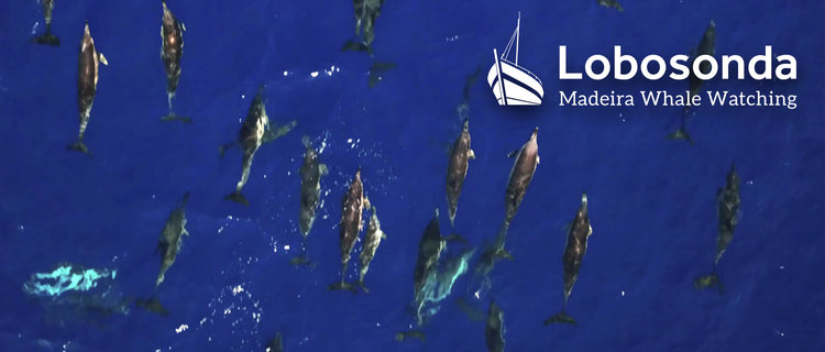 Lobosonda Wale Tours