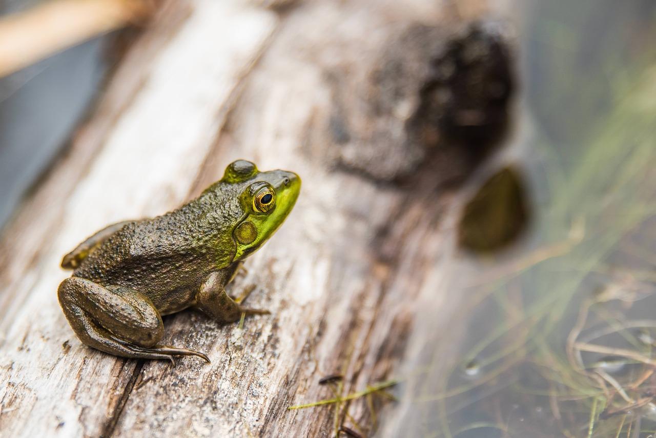amphibian-1853542_1280.jpg
