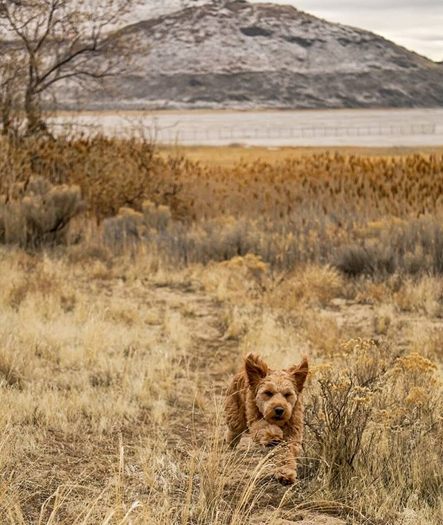 """""""The best feeling of happiness is when your happy because you made someone else happy."""" -Amy Reese Anderson  Bringing this guy out on all nighter road trips isn't always ideal but when I see him having the time of his life it's all worth it. #utahunique #visitutah #doglife"""