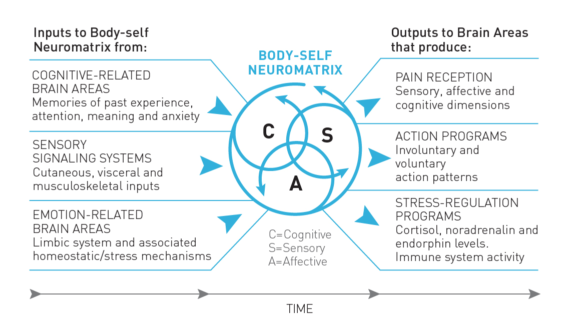 Figure     4    :    The Neuromatrix Theory of Pain. Adapted from Fig. 1 in Melzack (2001).