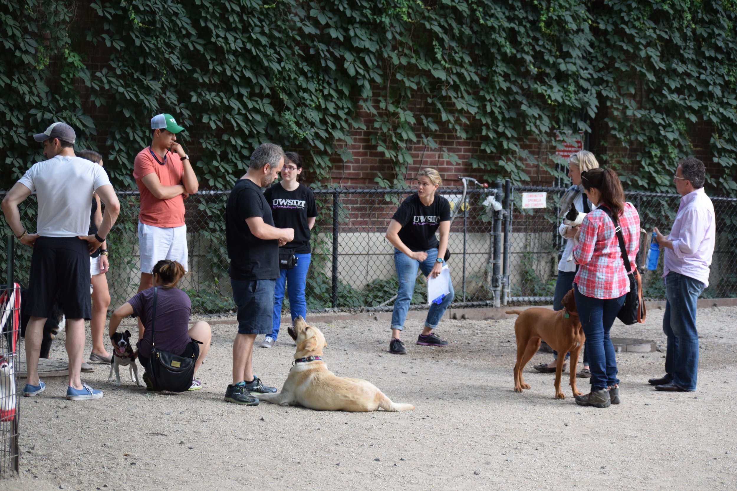 Group Classes - Group classes are the most economical way to learn new things with your dog. They also provide a fun opportunity for you and your dog to engage with other members of the community, socialize, and perfect good manners in distracting public environments. Learn more.