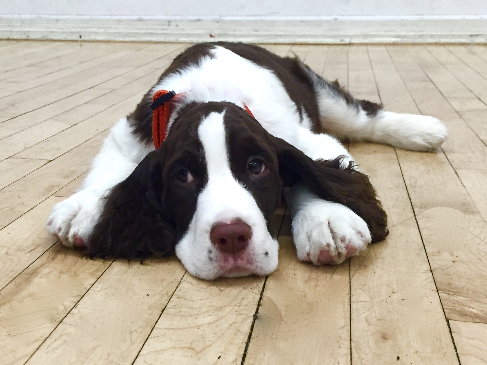 Overnight Training - In some cases, sending your dog to an overnight bootcamp may be the best way to get a leg up on the training process. An initial consultation is required to determine if your dog is a good candidate for this option. Learn more.