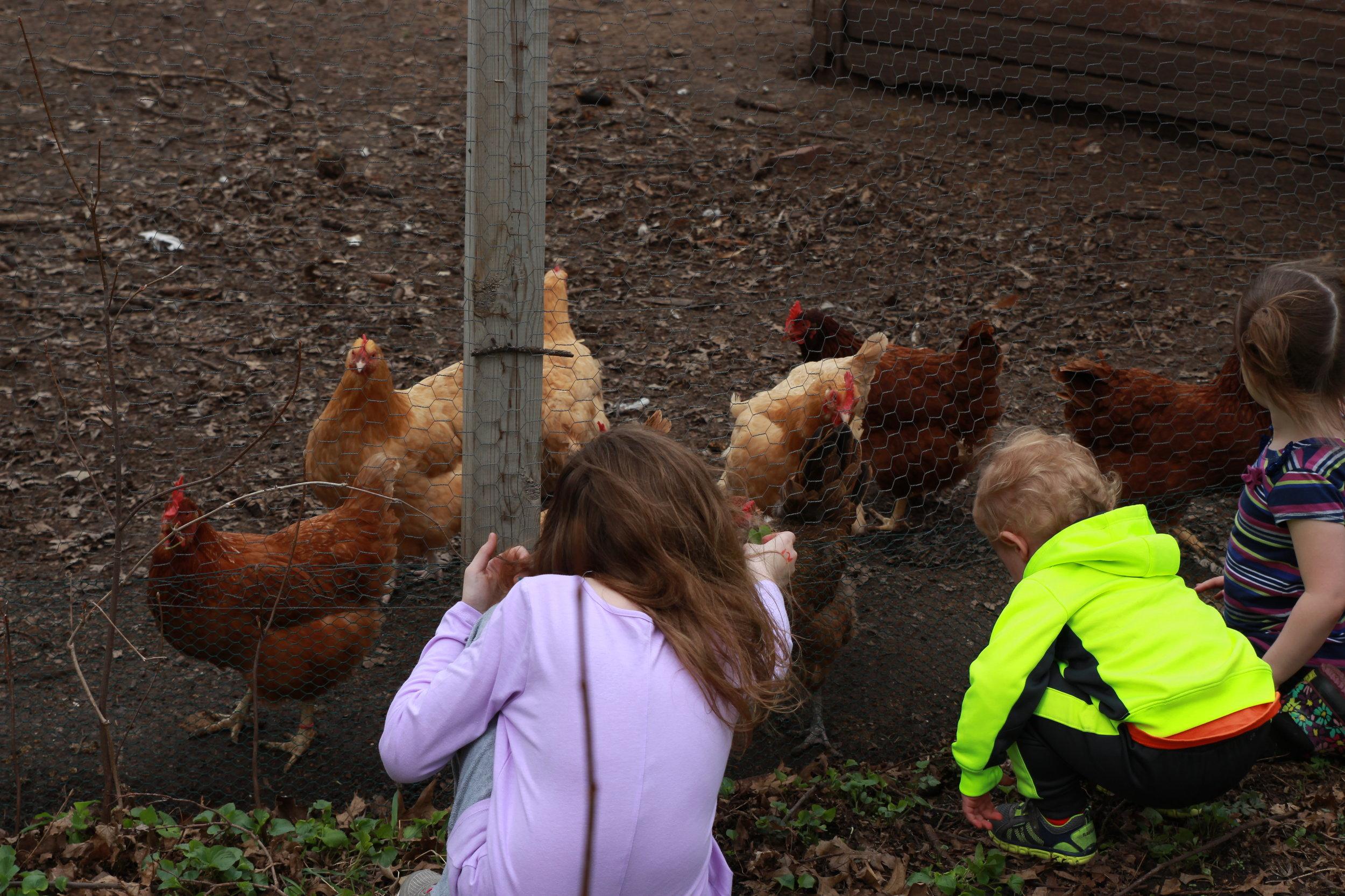 kids chickens.JPG