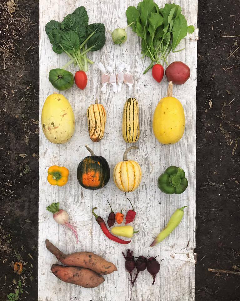 Week 20: Tatsoi, Kohlrabi, Arugula, Tomatoes, Goat Milk Caramels, Spaghetti Squash, Delicata Squash, Bell Peppers, Acorn Squash, Jester Squash, Watermelon Radish, Hot Peppers, Banana Pepper, Sweet Potatoes, Beets