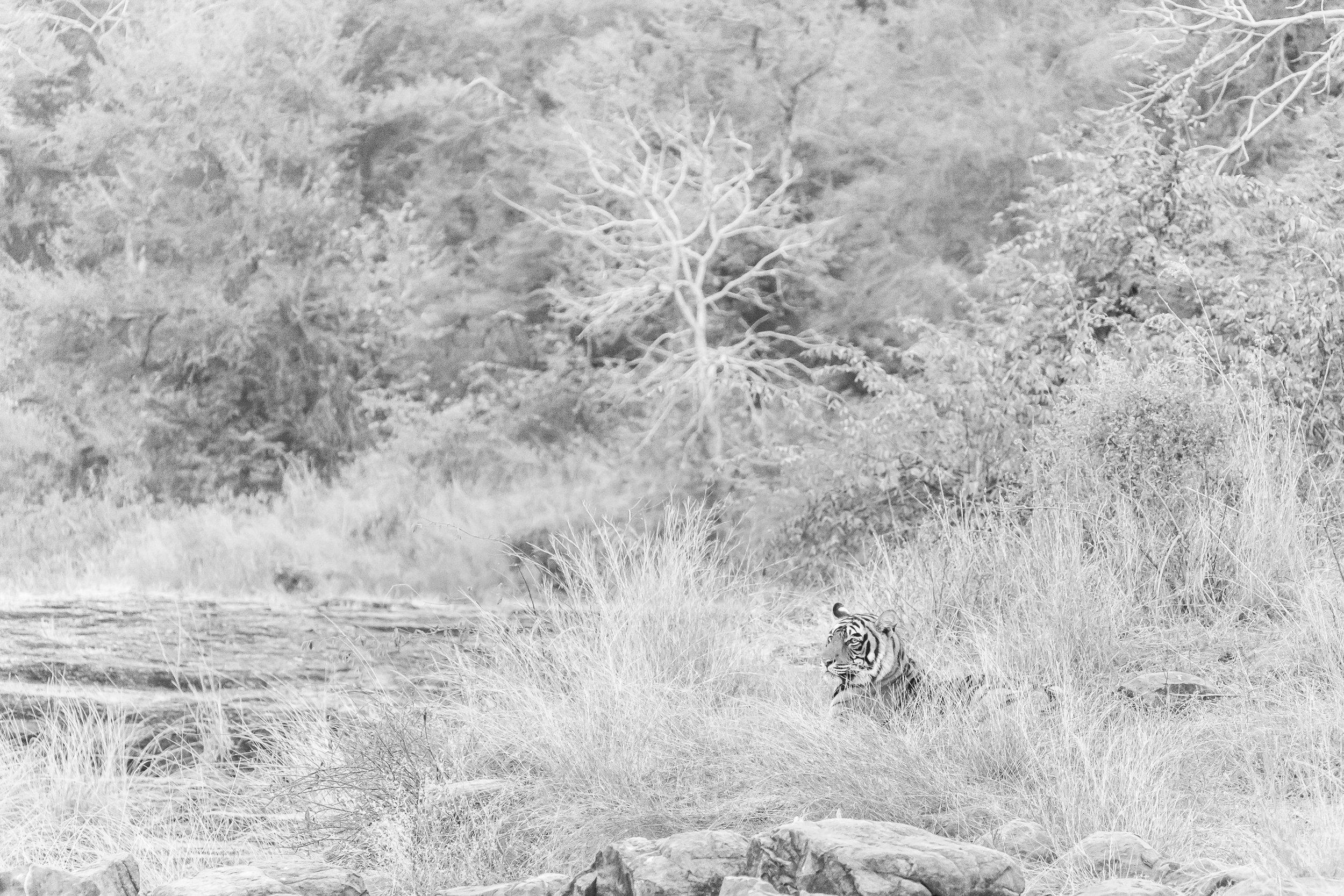 India 2013 - Lenssen-5766.jpg