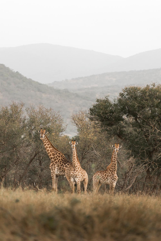SouthAfrica-146_LR.jpg