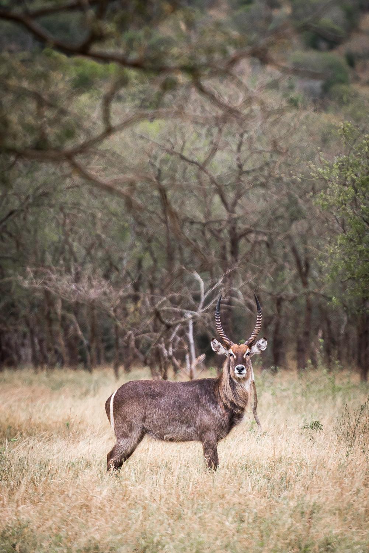SouthAfrica-201_LR.jpg