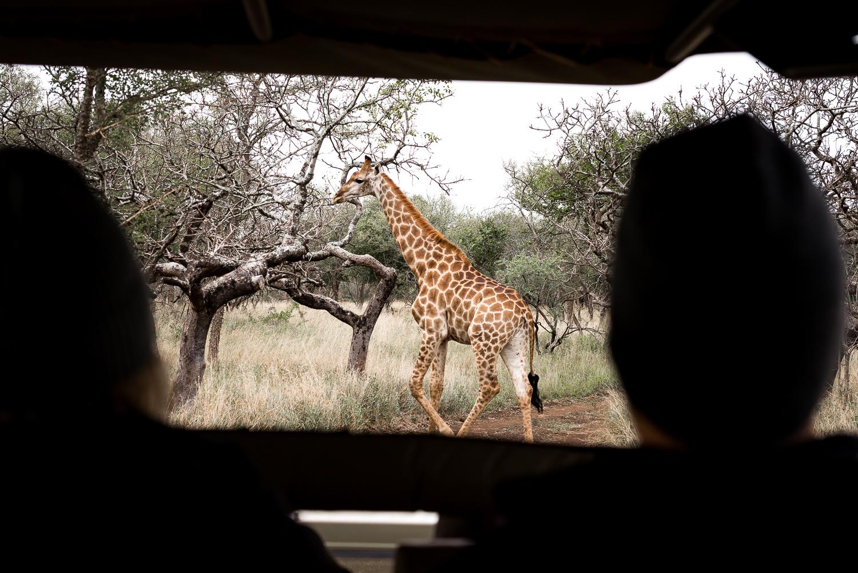 SouthAfrica-768-2_LR.jpg