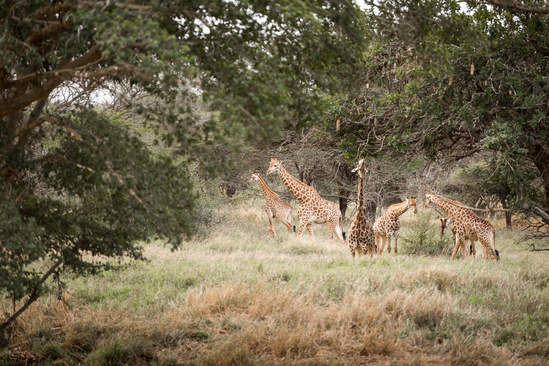 SouthAfrica-782-2_LR.jpg