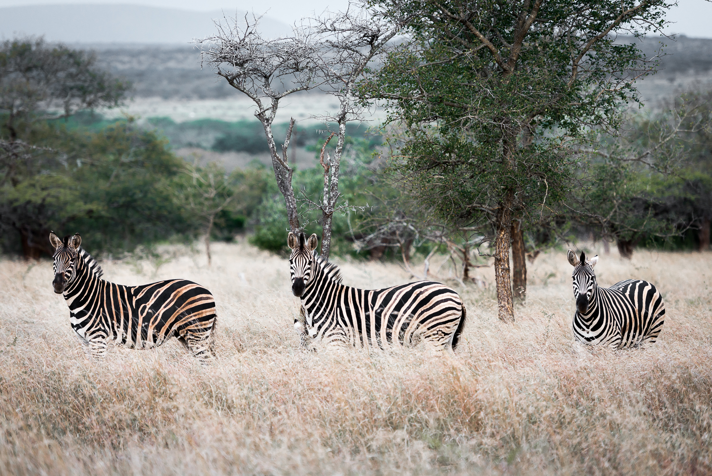 SouthAfrica-800-2_LR.jpg
