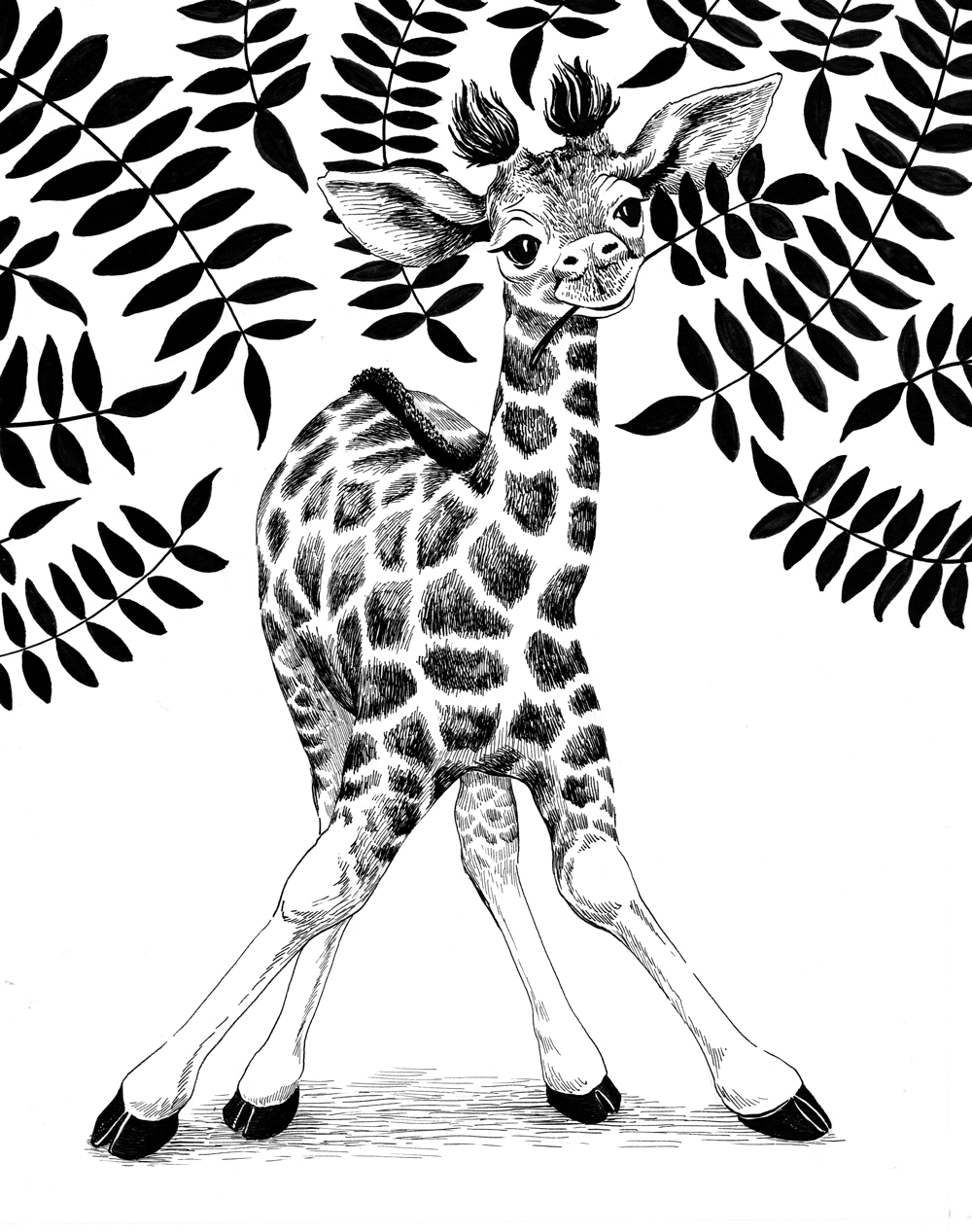 Previte_Baby Giraffe.jpg