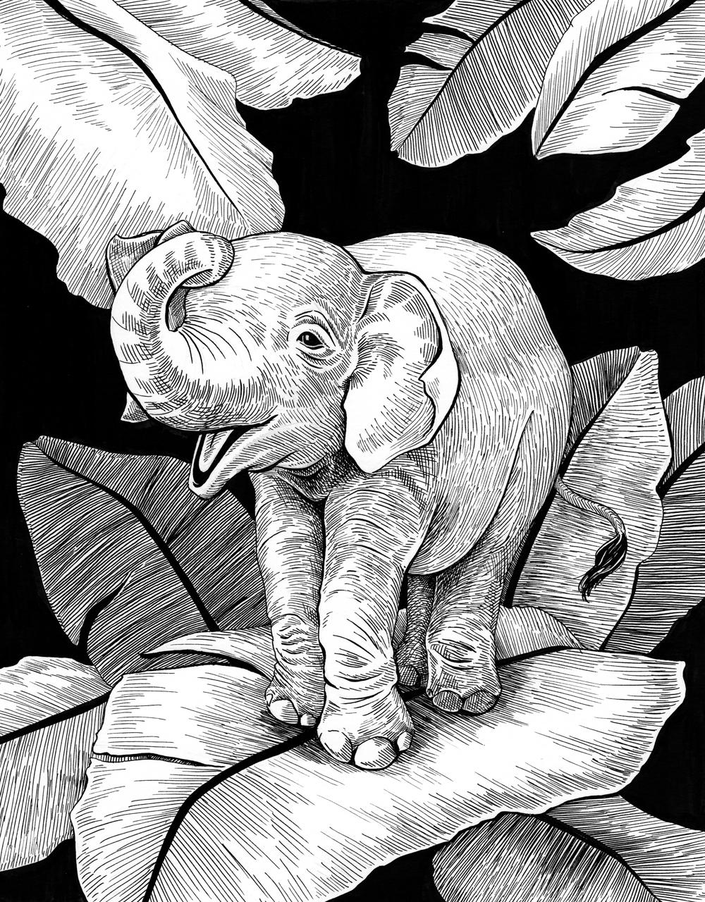 Previte_Baby Elephant.jpg