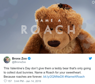 Screenshot of the Bronx Zoo's tweet about naming a cockroach for Valentine's Day marketing campaign.