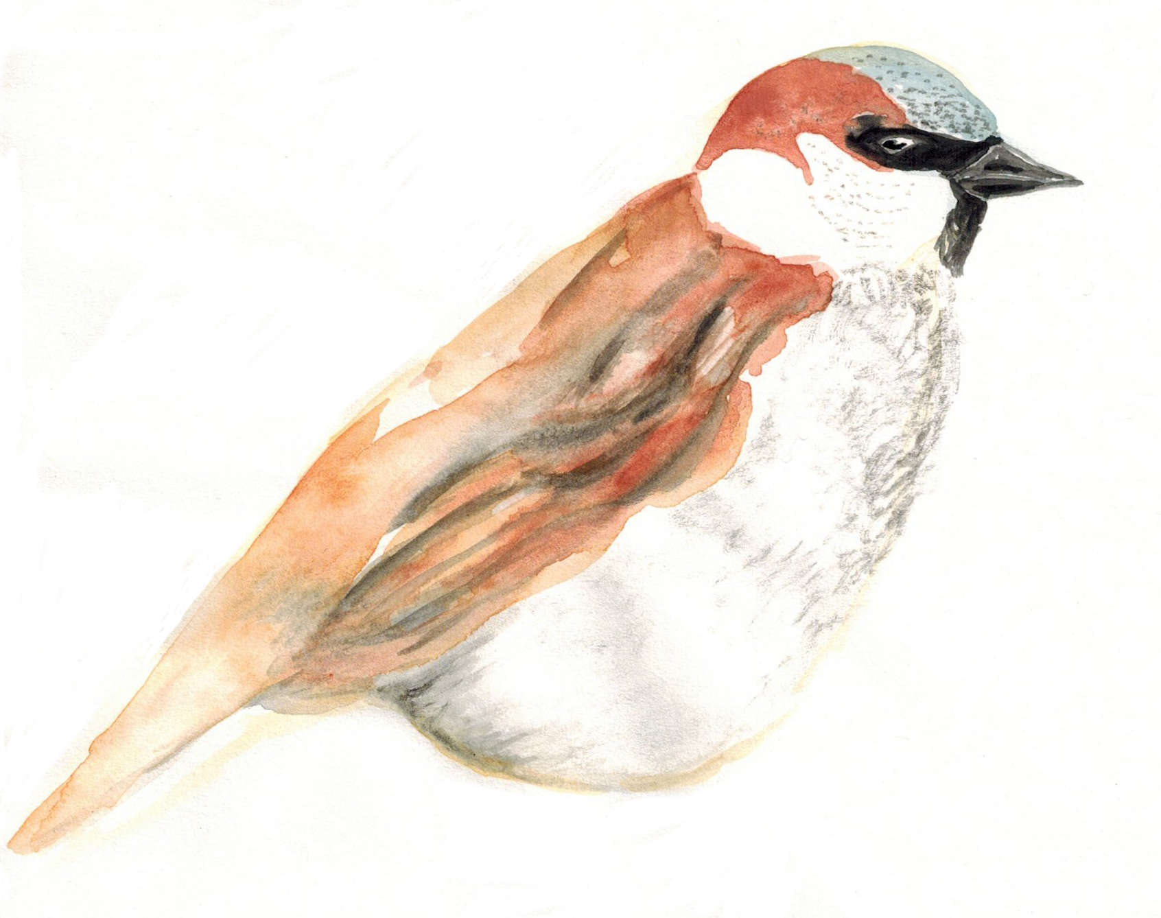 Sparrow Clean.jpg