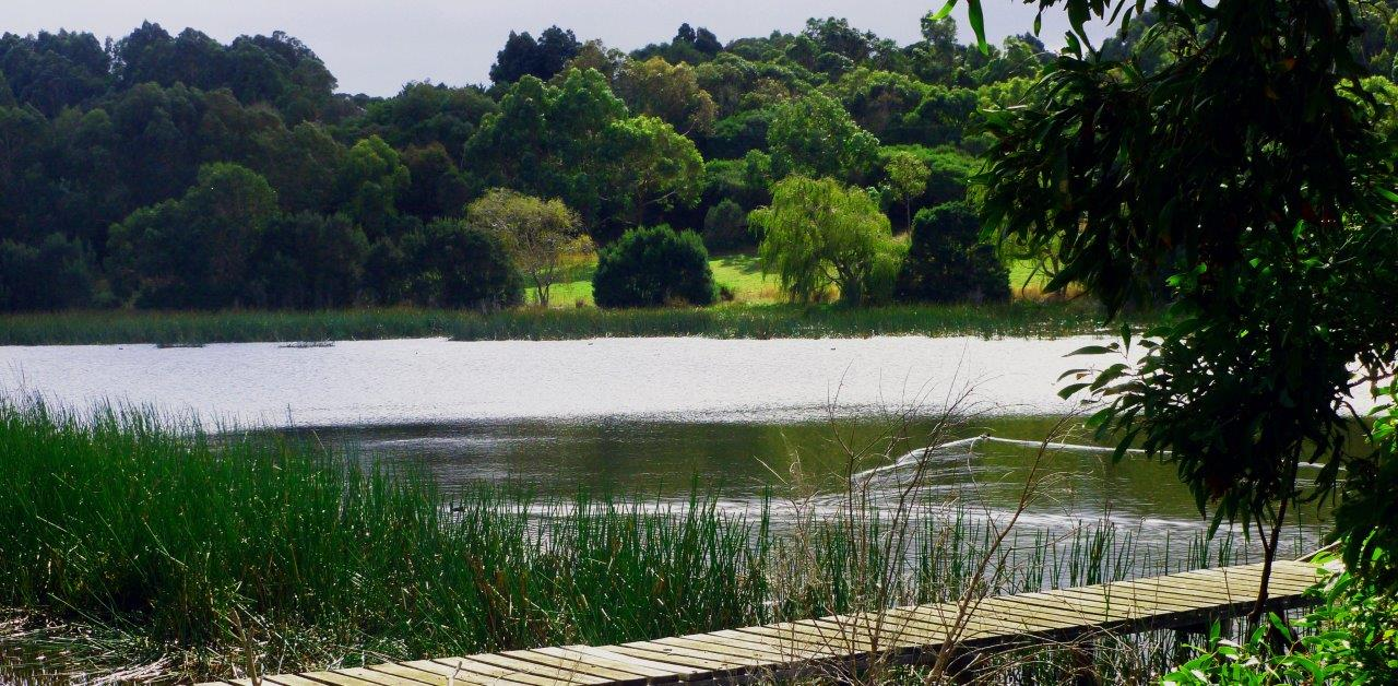 Lake Halliday website.jpg