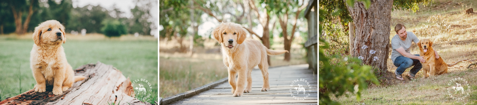 Puppy Photography in Adelaide Parklands